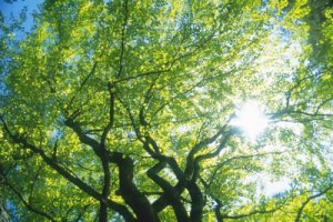 SMUD Offers Free Shade Trees